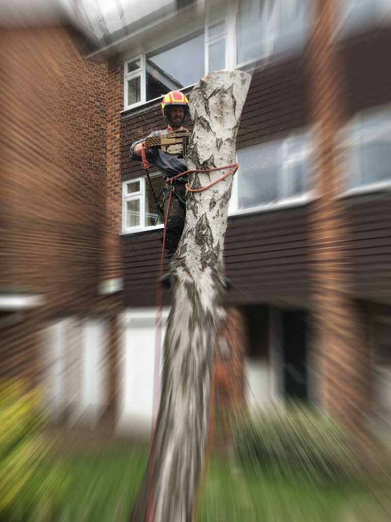 Andrew Steel is a tree surgeon in Surrey